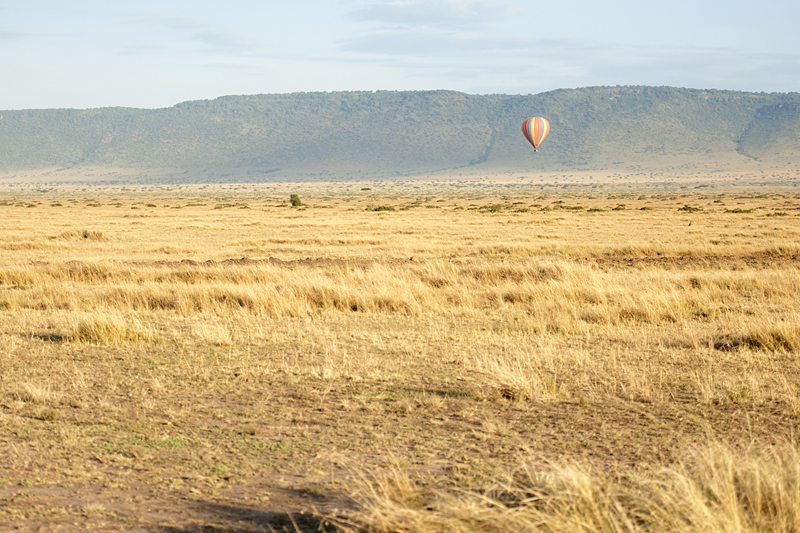 Balloon Safari 6854