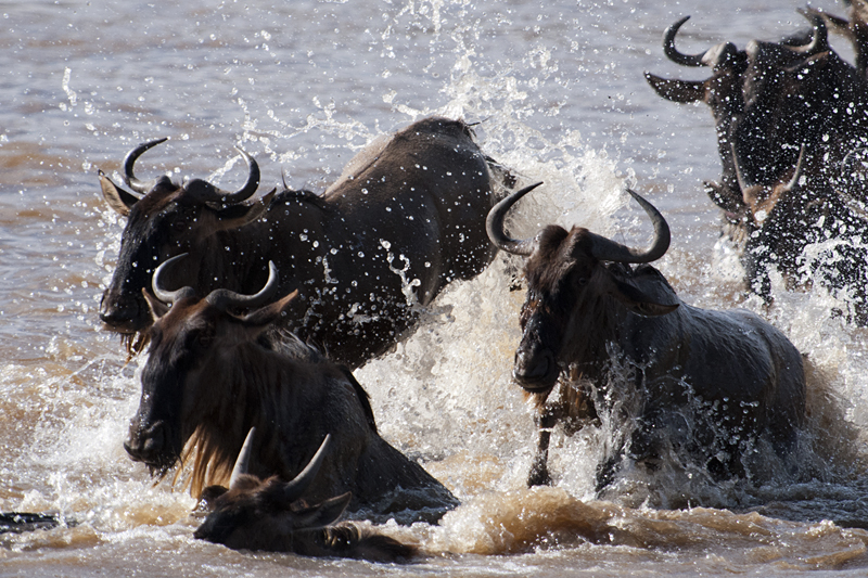Annual Wildebeest Migration