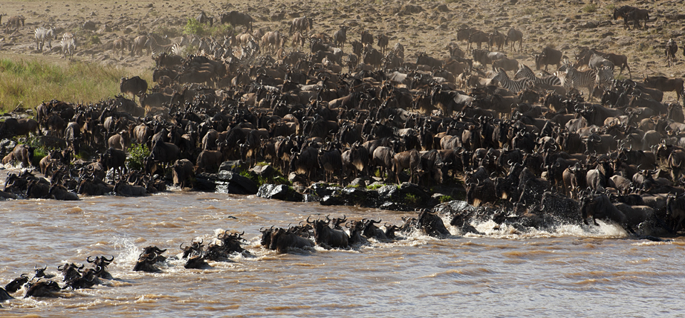 Annual Great Wildebeest Migration in Masai Mara