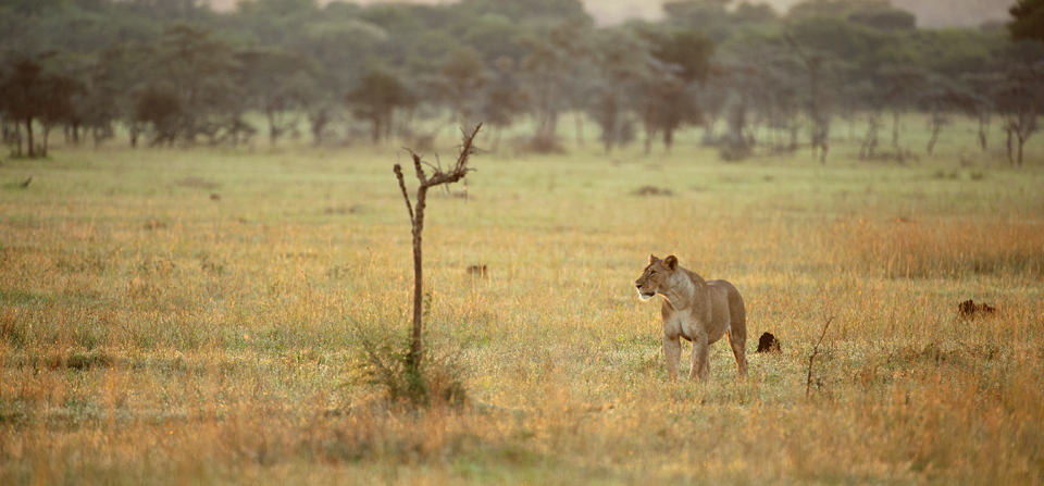 Animals against the African Savannah horizon