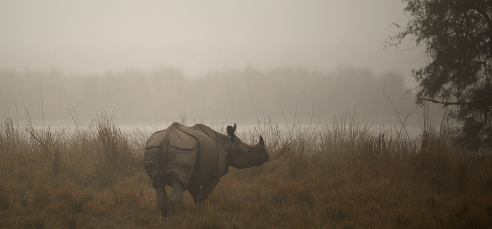 Elephant safari in Dudhwa National Park to spot Indian Rhinoceros