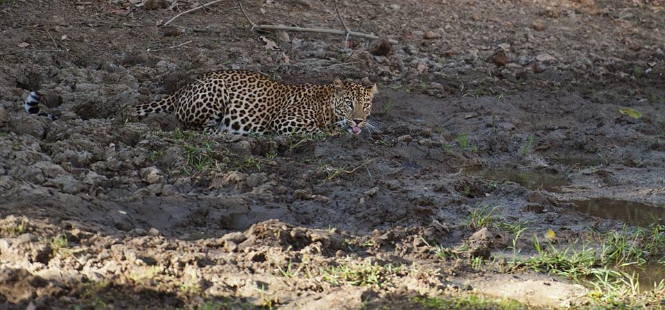Morning safari in Bandipur National Park