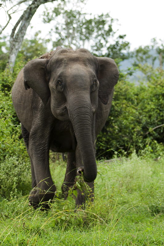 Elephant 1211
