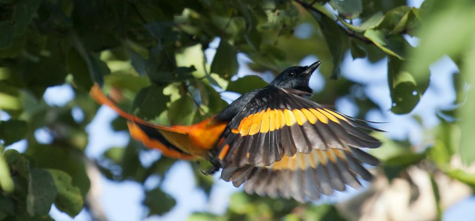 Best Wildlife Experiences of 2014