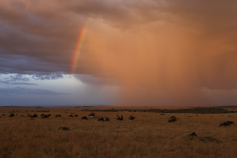 Rains in Masai Mara 1593