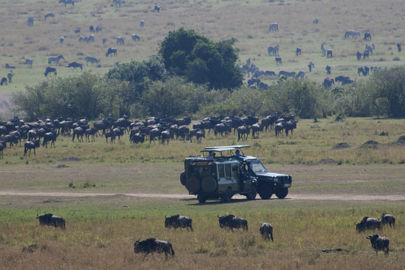Tourists waiting for Wildebeest crossing