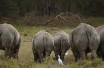 First Safari in Lake Nakuru National Park