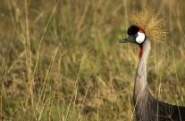 Birding safari in Lake Nakuru