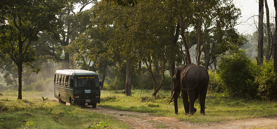 Tusker in Musth in Bandipur National Park