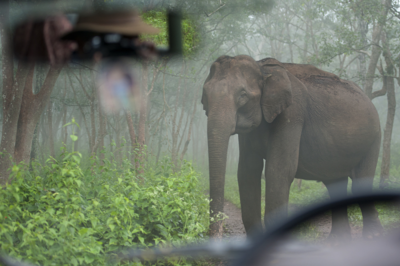 Elephant in BR Hills
