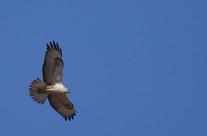 Great Rann of Kutch – Birding