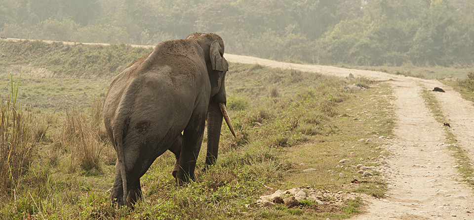 A game of patience – Tusker in Kaziranga