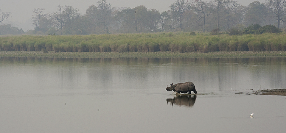 Kaziranga – Land of the Indian Rhinoceros