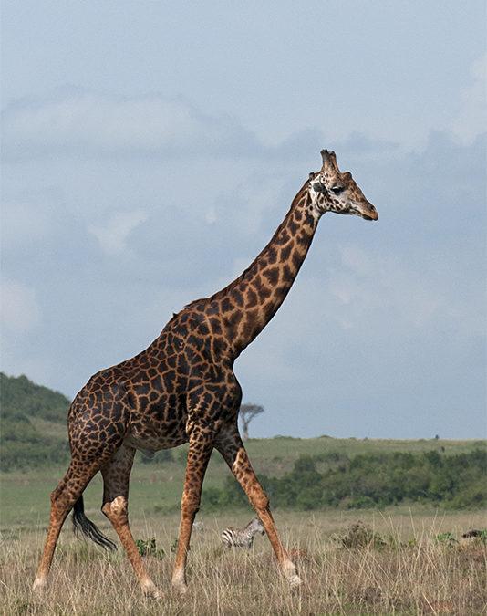 A morning in Masai Mara