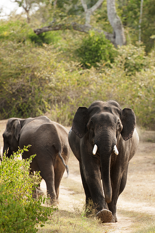 Rounding off a fantastic trip to Bandipur
