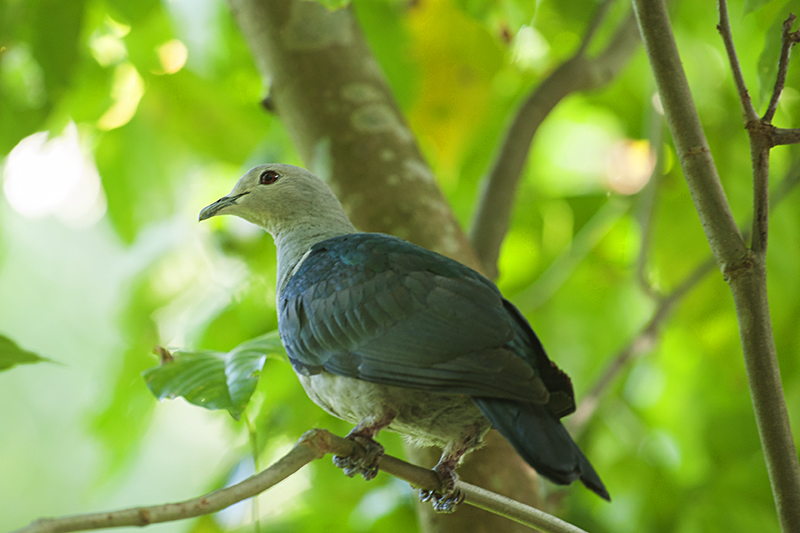 Preview to a birding paradise called Barefoot @ Havelock Island
