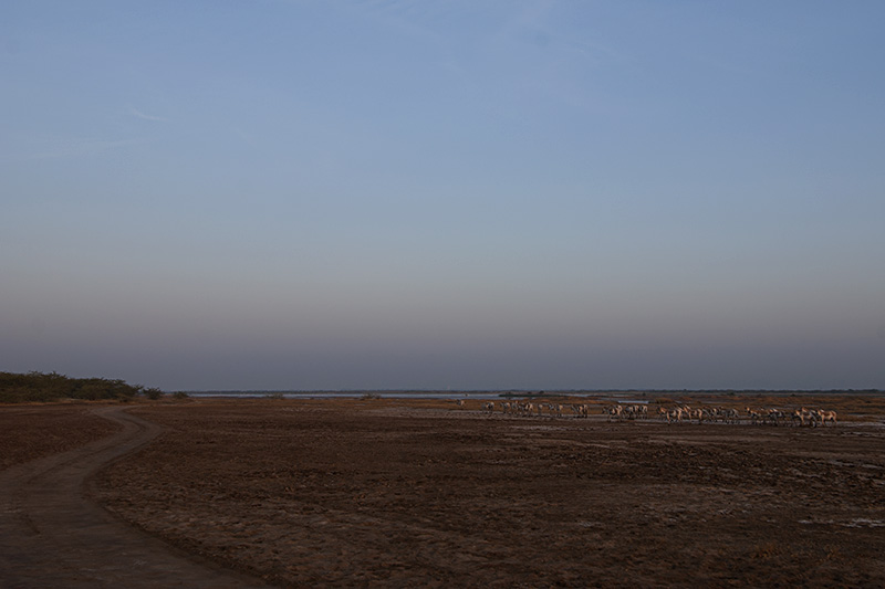 Rann of Kutch - Wild Ass Sanctuary