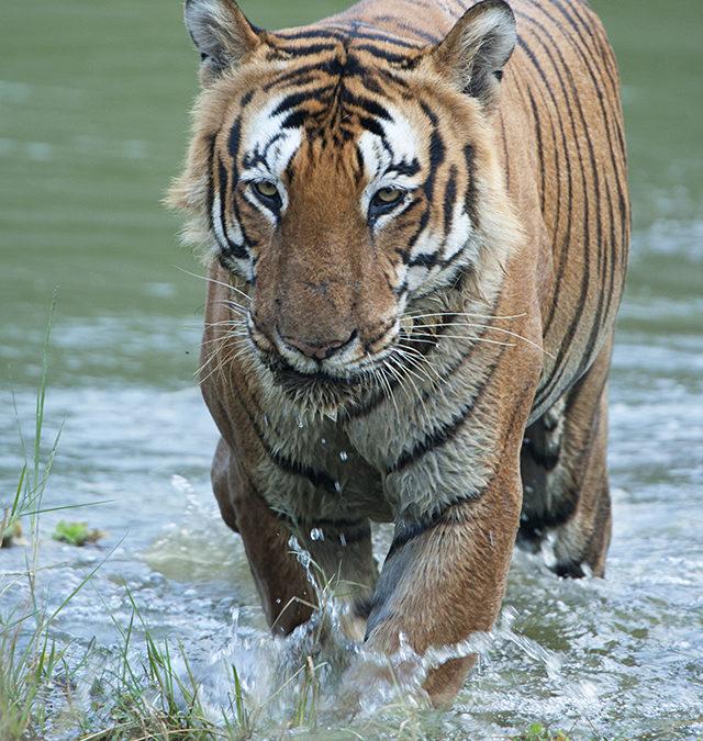 Best Wildlife moments of 2016