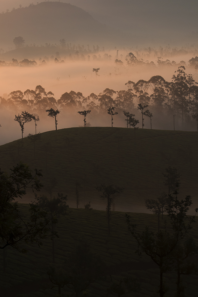 Sunrise in Valparai