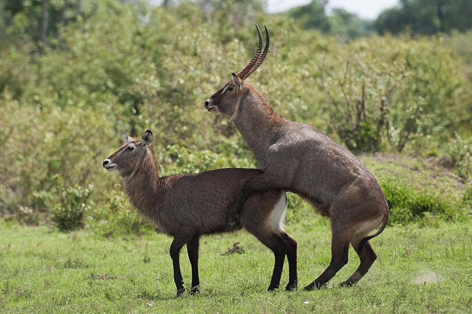 Animalscapes – Maasai Mara
