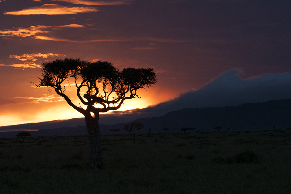 Magical Maasai Mara