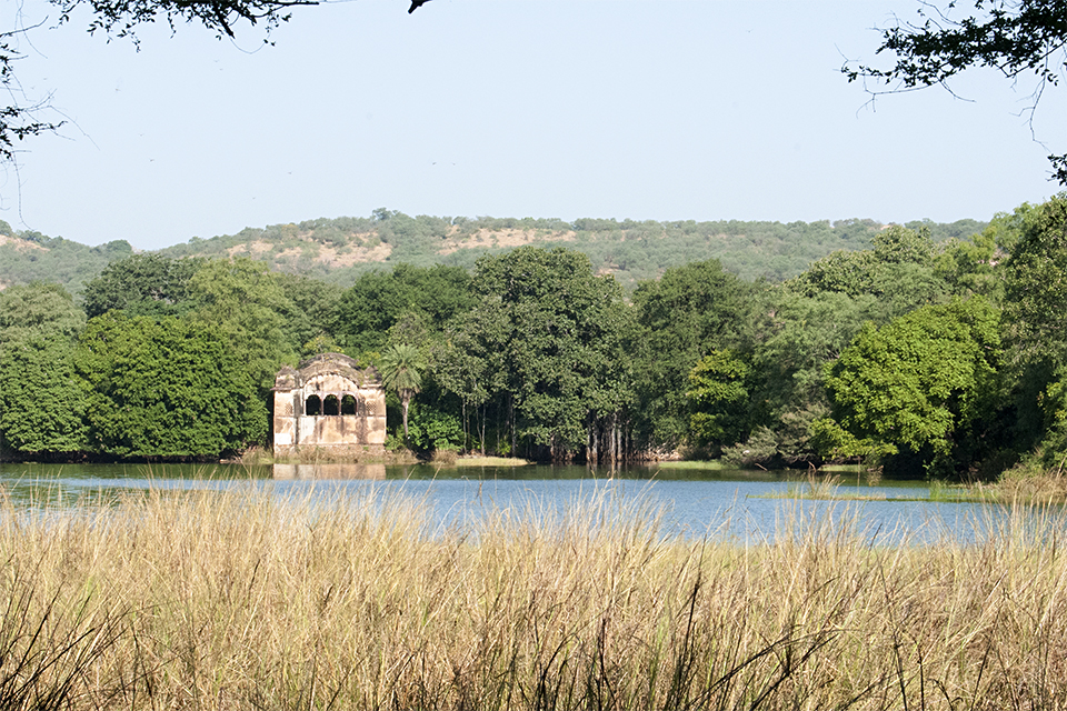 Ranthambore – India's most beautiful Tiger Reserve
