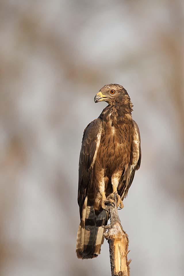 Agarzari – Tadoba's hidden birding hotspot