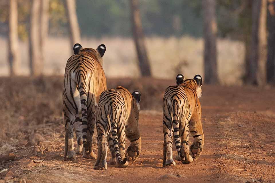 Best Wildlife Moments of 2017