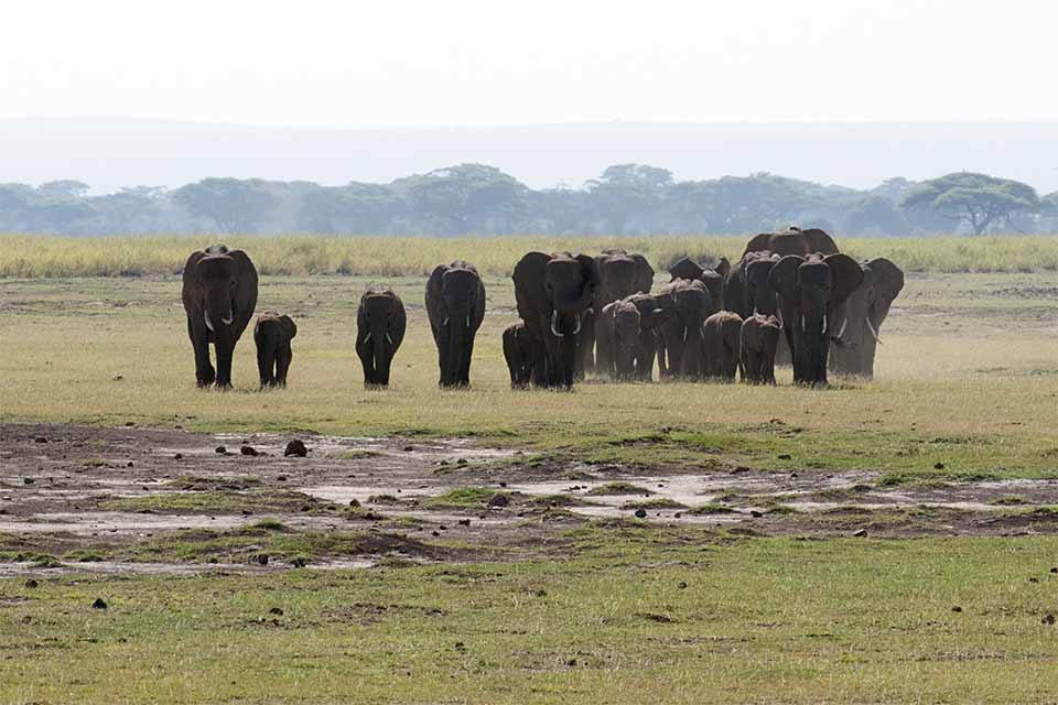 Watching the largest herd of African Elephants in Amboseli National Park