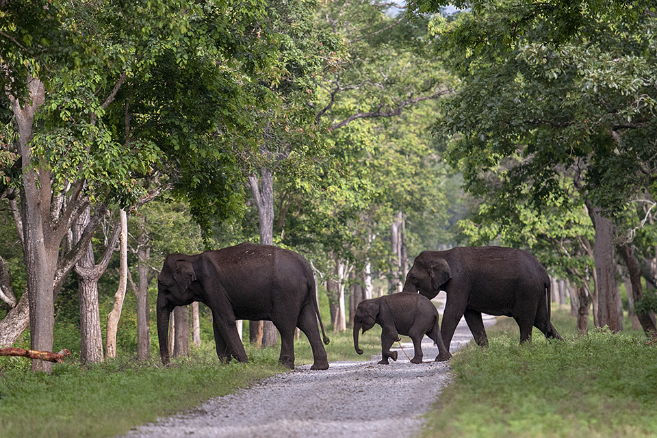 A quiet morning safari in Kabini Backwaters