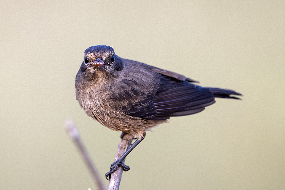 Birding in Bandipur