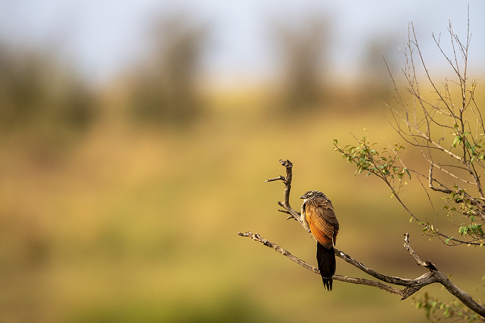 Birds of Maasai Mara