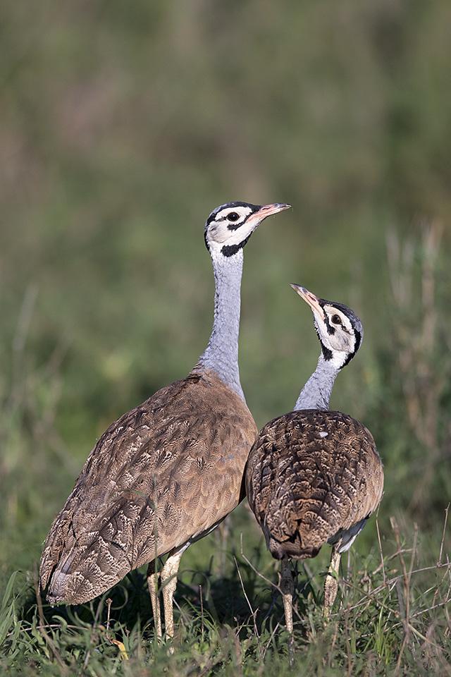 Safari in Serengeti National Park