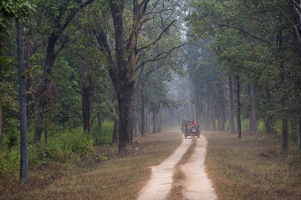Enchanting Sal forests of Kanha National Park