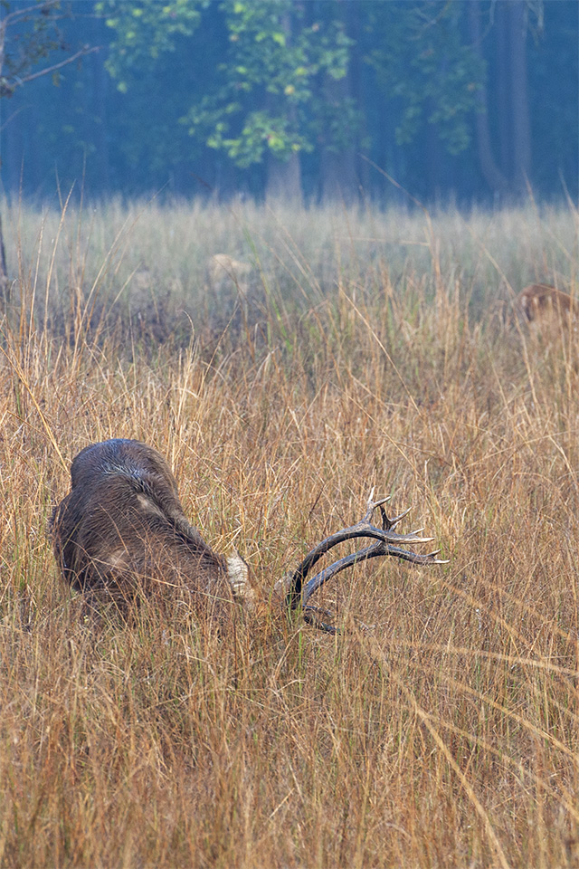 Animalscapes of Kanha
